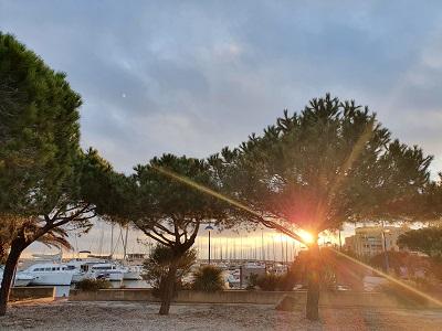 soleil faviere port bormes